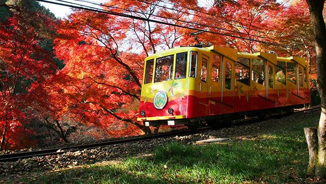 「高 尾山 紅葉」的圖片搜尋結果